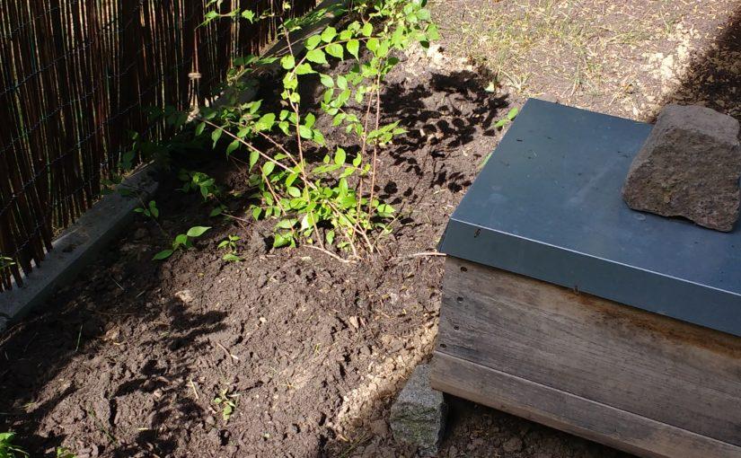 Eine einzargige Kisten mit Bienen im Garten des freien Lektors Christian Wöllecke in Berlin